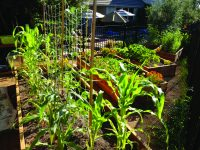 Creating Your Own Raised Garden
