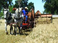 Patrick Ranch Museum's 16th Annual Threshing Bee